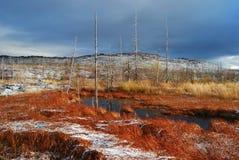 Sumpf klein Stockbild