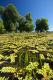Sumpf in Kroatien Lizenzfreies Stockbild