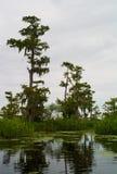 Sumpf-Landschaft mit Bäumen, Louisiana lizenzfreie stockbilder