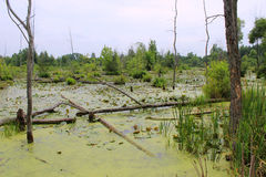 Sumpf-Lebensraum vektor abbildung