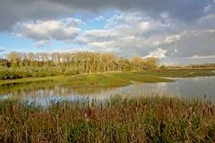 Sumpf mit Schilf und Bäume an einem bewölkten Tag Stockfotos