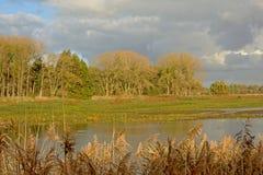 Sumpf mit Schilf und Bäume im sunlgiht aber mit dunklen Wolken oben Stockbild