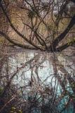 Sumpf mit verzweigtem Baum und Wasser im Frühjahr Lizenzfreie Stockfotos