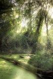 Sumpf Moorland Stockfotografie