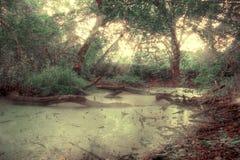 Sumpf Moorland Stockbilder