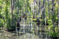 Sumpf nahe Charleston, South Carolina Lizenzfreie Stockbilder