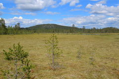 Sumpf nahe Gaellkleven in Dalarna in Schweden Lizenzfreies Stockbild