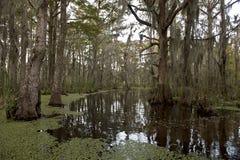 Sumpf nahe New Orleans, Louisiana Stockbilder