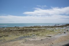 Sumpf nahe Ozean lizenzfreies stockfoto