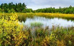 Sumpf in Nord-Michigan Lizenzfreie Stockbilder