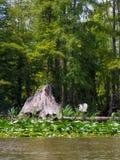 Sumpf oder sumpfiger Flussarm Stockfotos