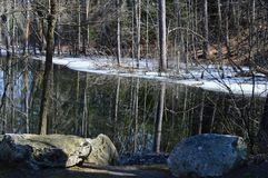 Sumpf am Schlaf-Höhlen-Kirchhof Stockfotografie