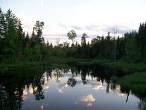Sumpf-Spiegel stockbilder