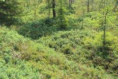 Sumpf in Sumava-Park Stockbilder