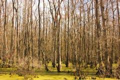 Sumpf-Szene Stockbild