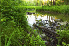 Sumpf tief im Wald Stockfoto