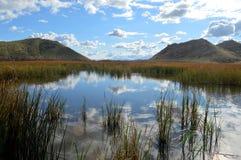 Sumpf u. Reflexion von Wolken auf Wasser Stockfotos