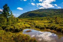 Sumpf und Berg im Acadia-Nationalpark, Maine Stockfotos