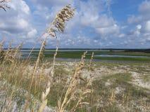 Sumpf und Düne Stockbild
