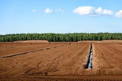 Sumpf und das Feld, auf denen die Produktion im blac durchgeführt wird Lizenzfreies Stockfoto