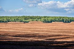 Sumpf und das Feld, auf denen die Produktion im blac durchgeführt wird Stockfotografie