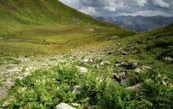 Sumpf und Fluss im Hochgebirge lizenzfreie stockfotografie