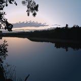 Sumpf und wilder Wald Stockbild