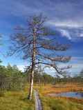 Sumpf Viru in der Estonia.The Beschaffenheit von Estland. Lizenzfreie Stockfotografie