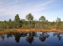 Sumpf Viru in der Estonia.The Beschaffenheit von Estland. Stockbilder