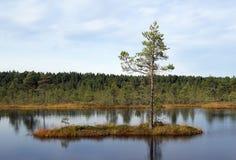 Sumpf Viru in der Estonia.The Beschaffenheit von Estland. Stockfotografie