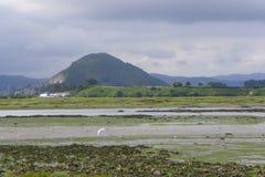 Sumpf von Santoña Lizenzfreie Stockfotos