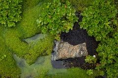 Sumpfblumen und -moos Stockfotografie