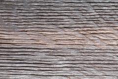 Sumpfeichenbeschaffenheit des versteinerten Holzes E lizenzfreie stockfotografie
