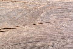 Sumpfeichenbeschaffenheit Holz Stockfotografie