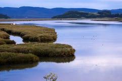 Sumpfgebiet lizenzfreies stockbild