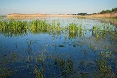Sumpfgebiet Lizenzfreies Stockfoto