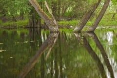 Sumpfgebiet Lizenzfreie Stockbilder