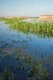 Sumpfgebiet Stockbild