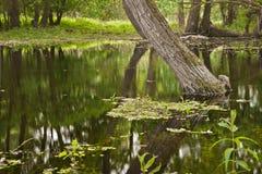 Sumpfgebiet Lizenzfreie Stockfotos