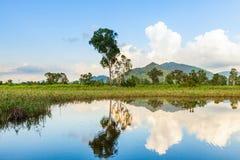 Sumpfgebiet stockbilder