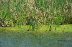Sumpfgebiet stockfotografie