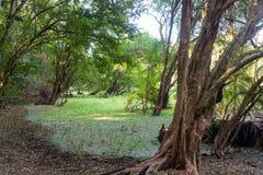 Sumpfgebiet in Calakmul-Biosphäre stockbilder