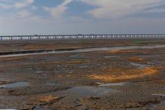 Sumpfgebiet der gelbes Goldmeerespflanze, die längste Brücke in der Welt durch die Hangzhou-Bucht Lizenzfreie Stockbilder