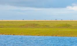 Sumpfgebiet entlang einem Teich im Winter lizenzfreies stockbild