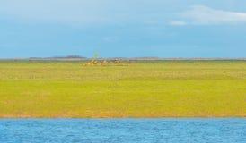 Sumpfgebiet entlang einem Teich im Winter stockbilder