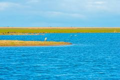 Sumpfgebiet entlang einem Teich im Winter stockfoto