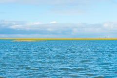 Sumpfgebiet entlang einem Teich im Winter stockfotos