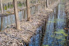 Sumpfgebiet forrest lizenzfreies stockfoto