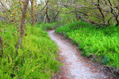 Sumpfgebiet-Küstengrasland-Spur Lizenzfreies Stockfoto