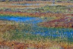 Sumpfgebiet mit Herbstfarben lizenzfreie stockfotografie